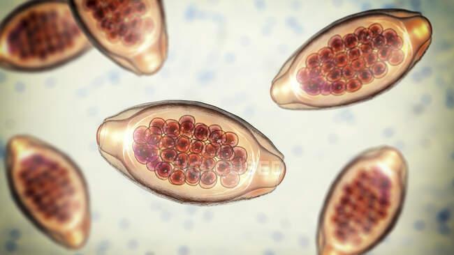 Huevos de gusano parásito Trichuris trichiura, ilustración por ordenador - foto de stock