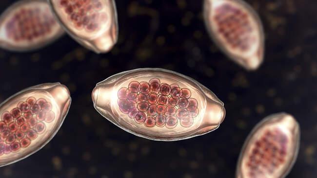 Eier des parasitären Wurms Trichuris trichiura, Computerillustration — Stockfoto