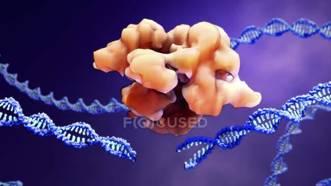 Complexe d'édition de gènes CRISPR-Cas9 et ADN, illustration informatique — Photo de stock