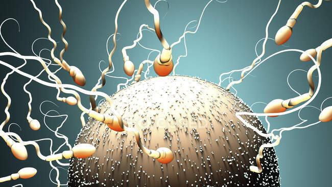 Fertilisation humaine, illustration informatique — Photo de stock