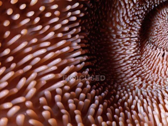 Vilões intestinais, ilustração de computador — Fotografia de Stock