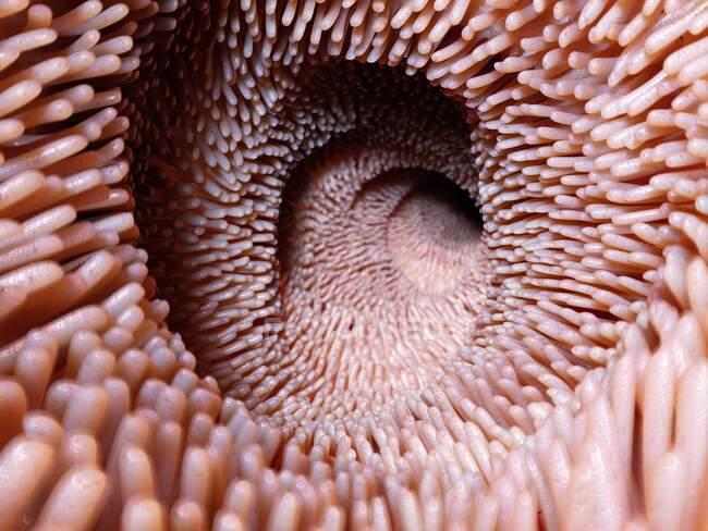 Vellosidades intestinales, ilustración por ordenador - foto de stock