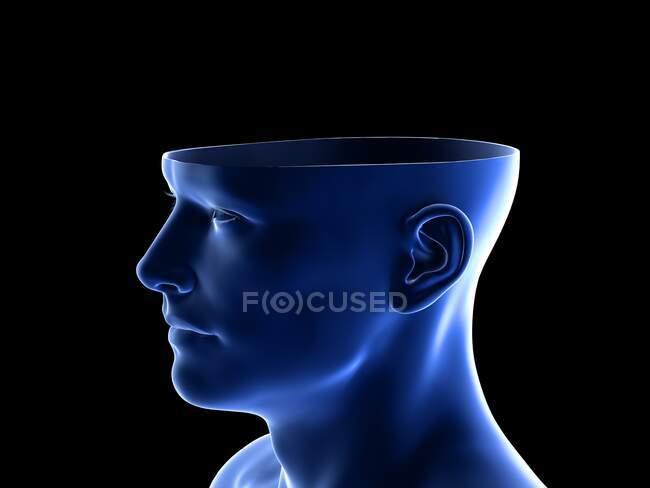 Anatomie de la tête, illustration informatique — Photo de stock