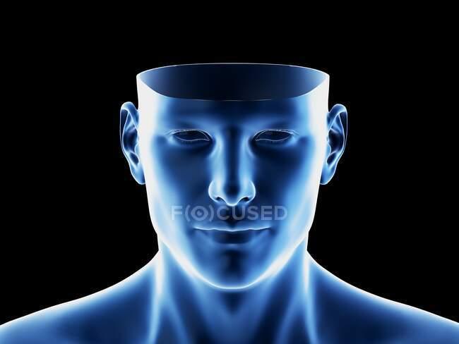 Anatomia della testa, illustrazione al computer — Foto stock