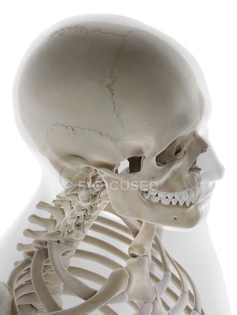 Calavera humana, ilustración por computadora - foto de stock