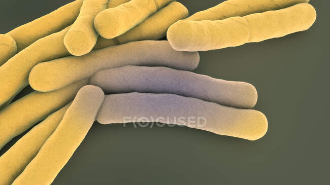 Tuberculosis bacteria, 3d illustration. — Stock Photo