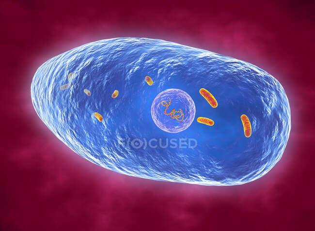Whoping cough bacterium (Bordetella pertussis) Ці грем-негативні бацили спричиняють коклюш, відомий як пертусис, в основному у немовлят. — стокове фото