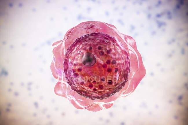 Balamuthia mandrillaris amoeba, ilustração computacional — Fotografia de Stock