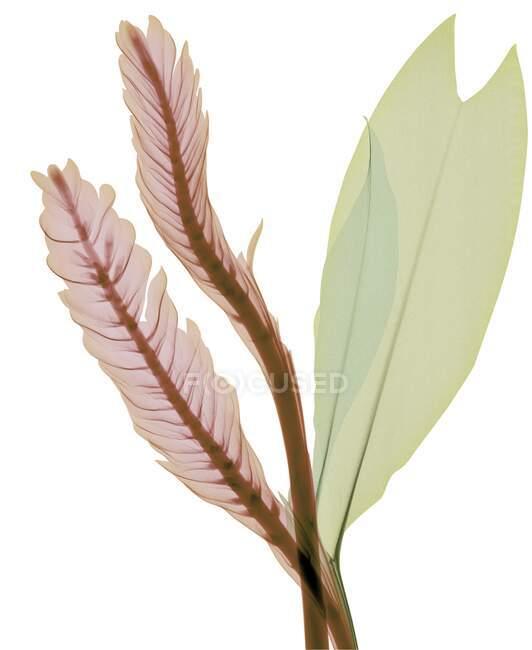 Magenta und grüne Blätter, farbiges Röntgenbild. — Stockfoto