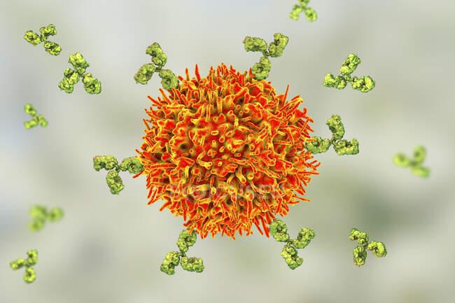Célula B e anticorpos, ilustração do computador — Fotografia de Stock