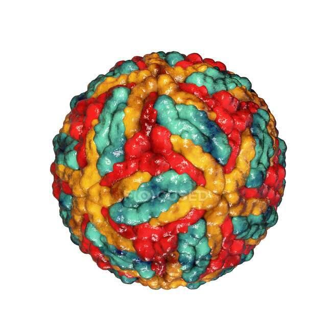 St. Louis encephalitis virus particles, computer illustration — Stock Photo