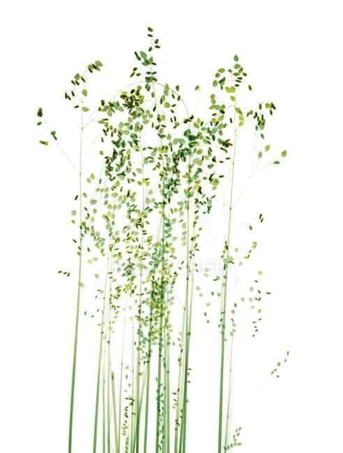 Трави, кольорове рентгенівське проміння, радіологічне сканування — стокове фото