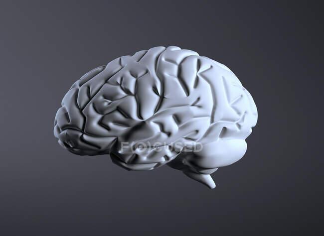Cérebro humano, ilustração computacional — Fotografia de Stock