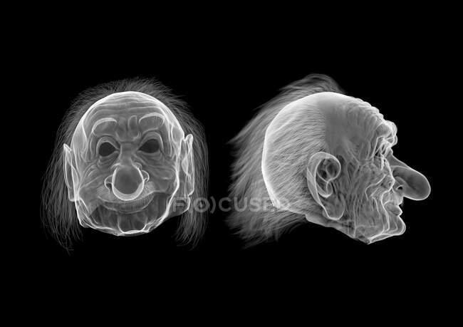 Máscara de Einstein, raio-X. — Fotografia de Stock