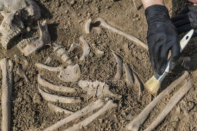 Археологічні розкопки. Залишки людських скелетів знайдені в стародавній гробниці.. — стокове фото