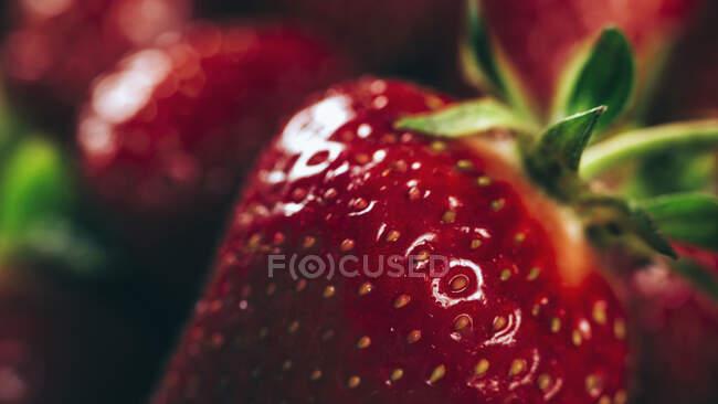 Primer plano de fresas frescas - foto de stock