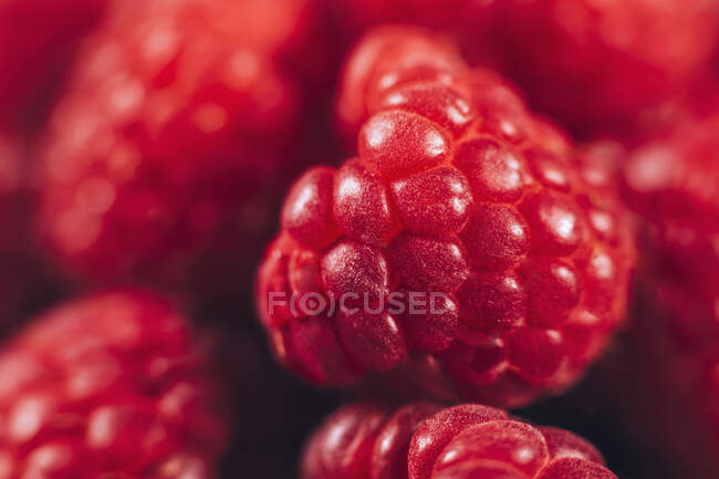 Primer plano de frambuesas frescas - foto de stock