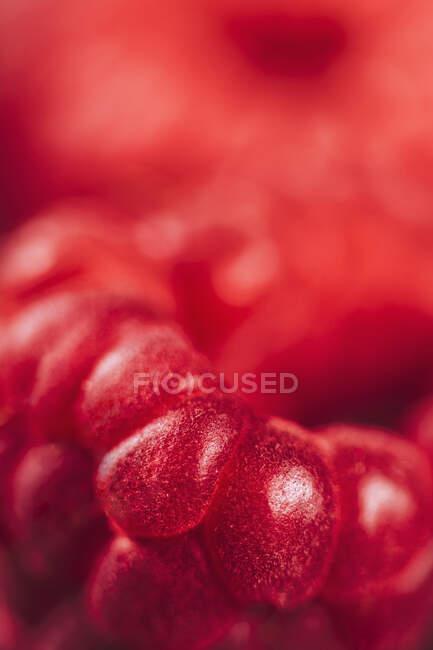 Close-up de framboesas frescas — Fotografia de Stock
