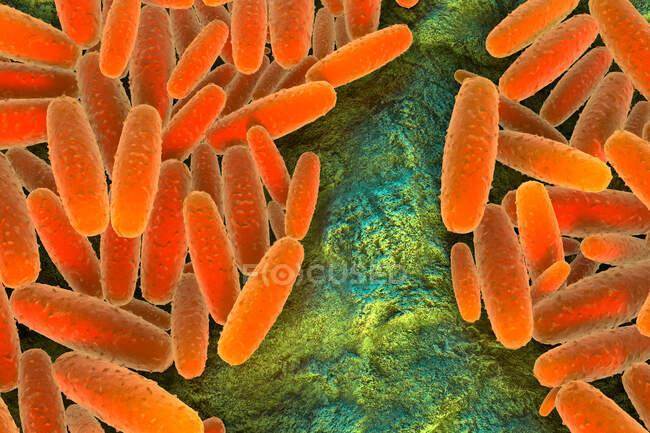 3d ilustración de la bacteria Pasteurella multocida. Esto es Gram-negativo, inmóvil, coccobacilos sensibles a la penicilina pertenecientes a la familia Pasteurellaceae - foto de stock