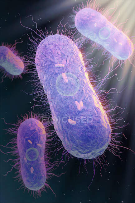 3d illustration of Salmonella sp. bacteria showing internal structure — Stock Photo