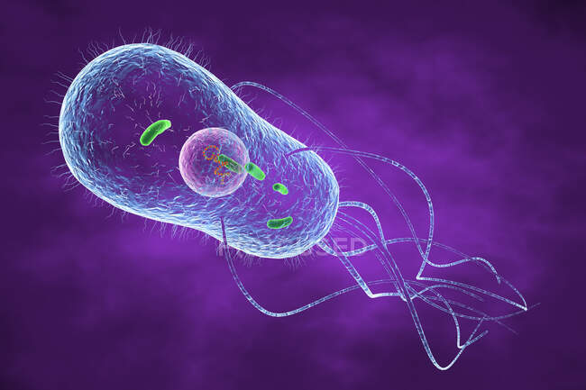 3d illustration of a Salmonella sp. bacterium showing internal structure — Stock Photo