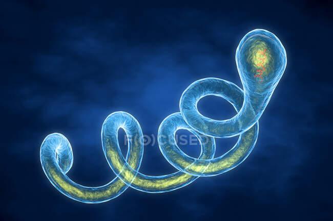 3d ilustración de la bacteria Spirochaete Borrelia, la causa de la enfermedad de Lyme - foto de stock