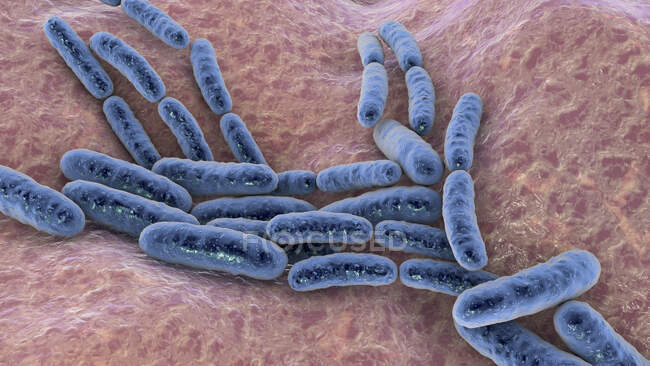 Lactobacillus bacteria, computer illustration. This is the main component of the human small intestine microbiome. — Stock Photo