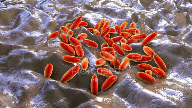 Bacterias de la peste (Yersinia pestis), ilustración por ordenador. - foto de stock