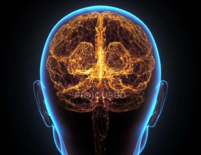 Radiografía de la cabeza y del cerebro humano en concepto de conexiones neuronales y pulsos eléctricos. - foto de stock
