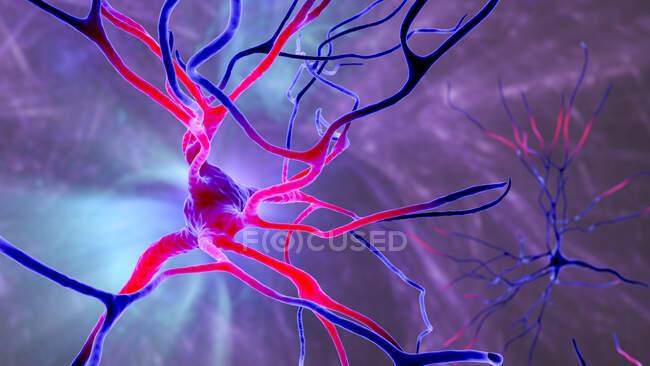 Neuronas piramidales (células nerviosas) de la corteza frontal del cerebro humano, ilustración por ordenador - foto de stock