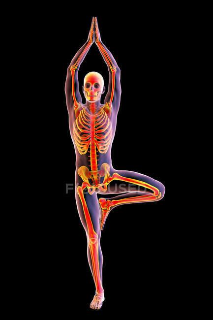Ilustración del esqueleto de una persona en la pose del árbol, o Vrikshasana. - foto de stock