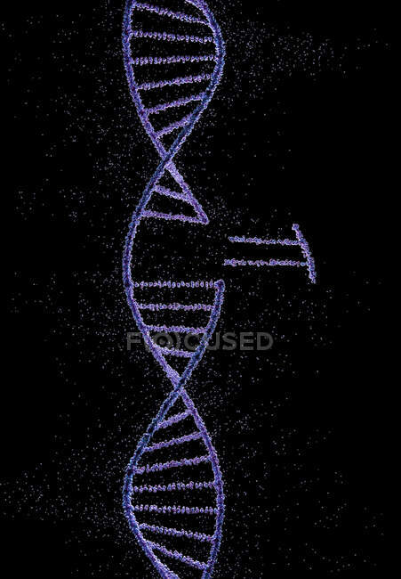 Genetic engineering, conceptual illustration — Stock Photo