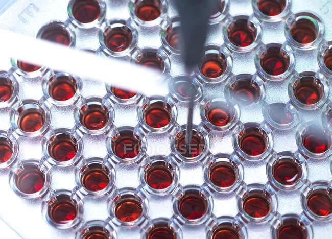Análisis de muestras de sangre de una placa de varios pozos durante una investigación clínica. - foto de stock