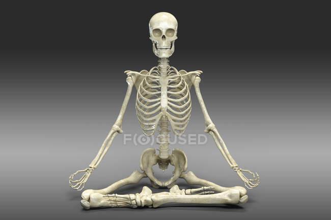 Esqueleto humano en posición de loto yoga, o padmasana. Ilustración por computadora que muestra actividad esquelética en esta postura de yoga. - foto de stock