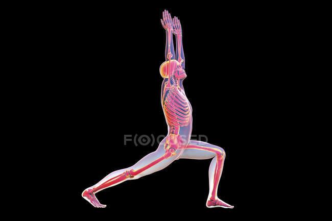 Anatomía del guerrero 1 pose, o virabhadrasana 1. Ilustración por computadora que muestra un cuerpo masculino con esqueleto resaltado que demuestra la actividad esquelética de esta postura de yoga. - foto de stock