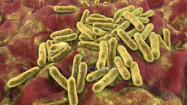 Cutibacterium (anteriormente Propionibacterium) bactérias, ilustração do computador. Estes são um exemplo de bactérias não patogênicas encontradas na pele humana, onde estão bem adaptadas à acidez natural. Um exemplo é Cutibacterium acnes — Fotografia de Stock