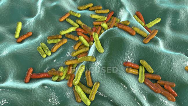 Cutibacterium (anteriormente Propionibacterium) bacteria, ilustración por ordenador. Estos son un ejemplo de bacterias no patógenas que se encuentran en la piel humana, donde están bien adaptadas a la acidez natural. Un ejemplo es Cutibacterium acnes - foto de stock