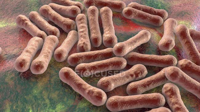 Corynebacterium diphtheriae, ilustración por ordenador. C. diphtheriae es una bacteria grampositiva en forma de barra que se transmite por gotitas respiratorias y causa la difteria enfermedad - foto de stock
