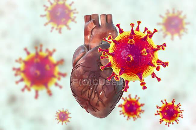 Virus Covid-19 que afectan al corazón, ilustración conceptual 3D. La inflamación del corazón y otros órganos puede ser una complicación de Covid-19, una enfermedad respiratoria causada por el nuevo coronavirus SARS-Cov-2 - foto de stock
