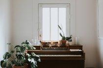 Plantas en macetas en el piano - foto de stock