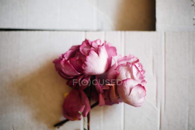 Свіжі вирізати purple троянд — стокове фото