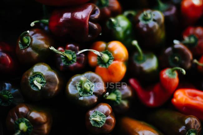 Fraîchement cueillies poivrons colorés — Photo de stock