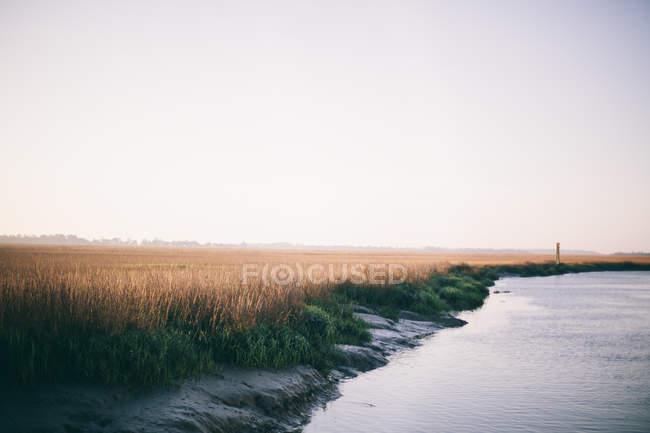 Campo di grano vicino al lago — Foto stock