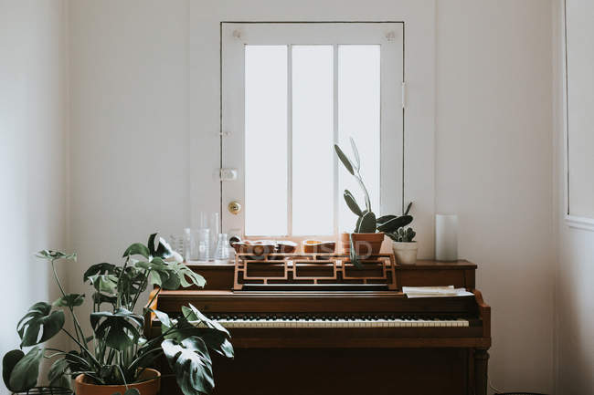Plantas em vasos no piano — Fotografia de Stock