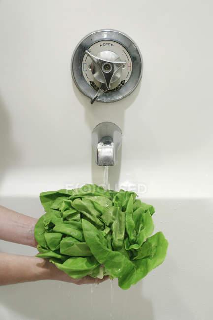 Woman Washing lettuce under tub — Stock Photo