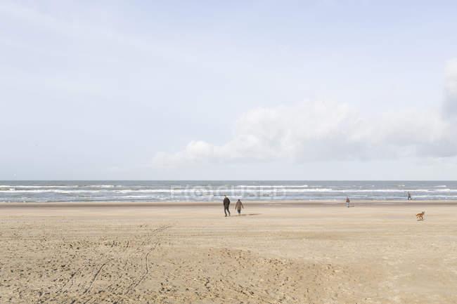 Люди, що йдуть на піщаному пляжі з собакою — стокове фото