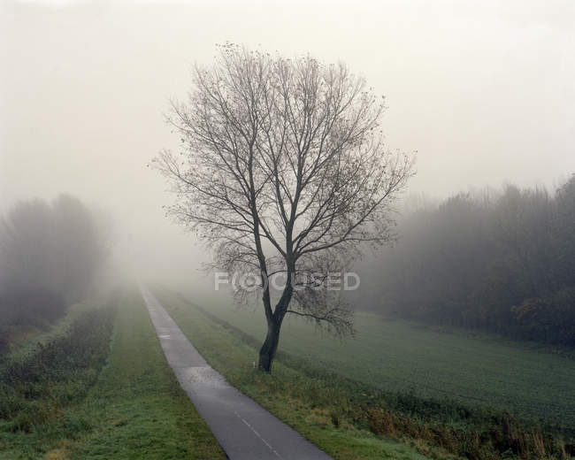 Tree in mist next to bike path — Stock Photo