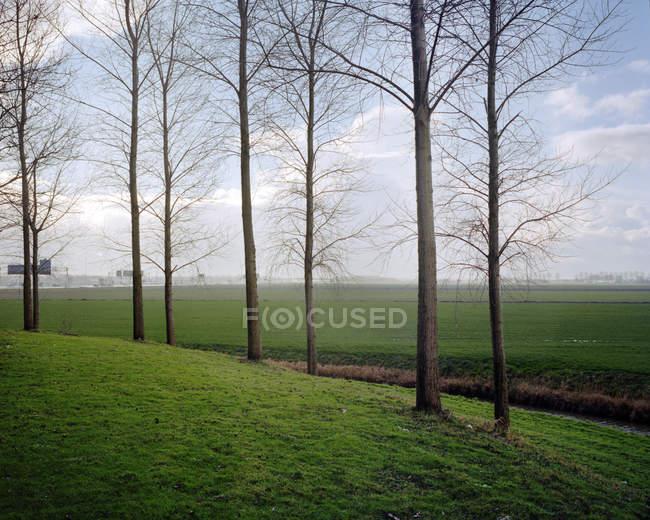 Rangée d'arbres sur le bord du champ — Photo de stock