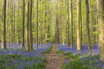 Shot of Blue Forest of Belgium — Stock Photo