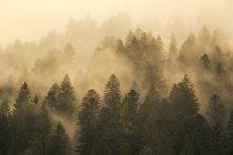 Brouillard sur la forêt d'automne sur la pente de la montagne — Photo de stock